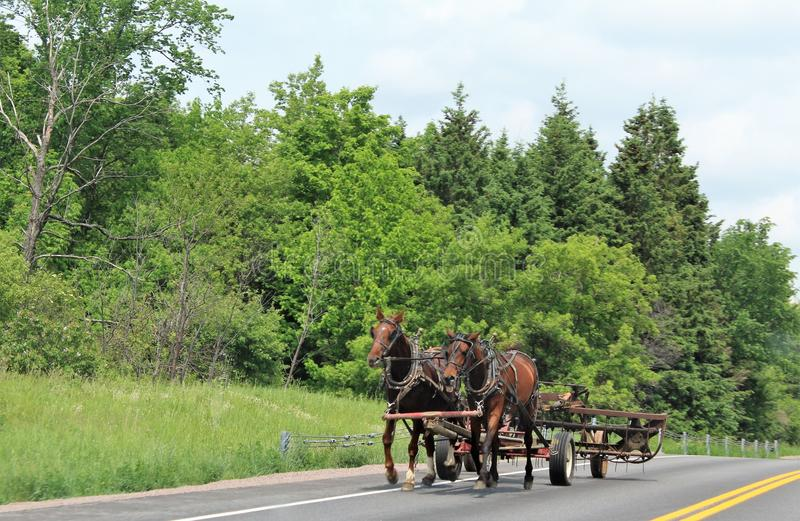 Horse pulling farm equipment in rural upstate Franklin County, New York, United States. Brown horses pulling farm equipment in rural upstate Franklin County, New stock photo