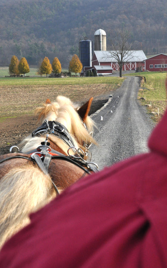 Horse pulling wagon on Amish farm stock photo
