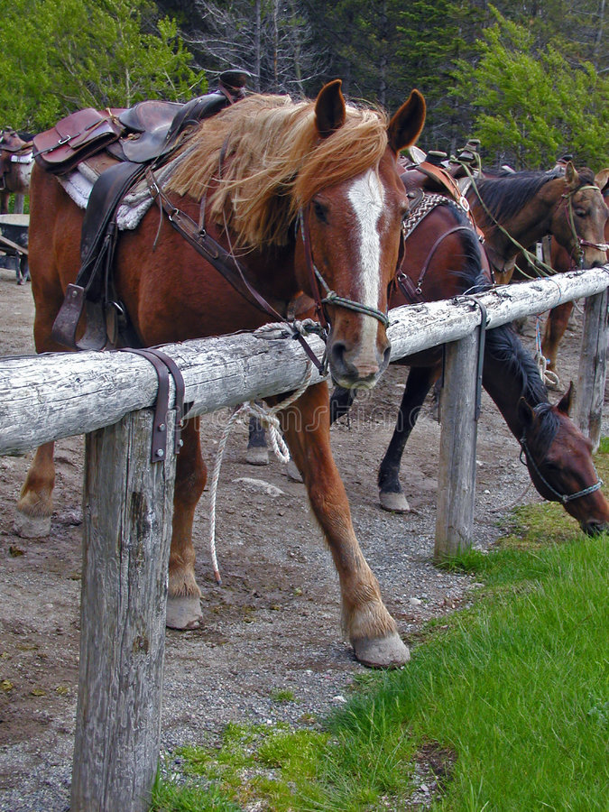 Free Horse Putting Best Foot Forward Stock Image - 957451