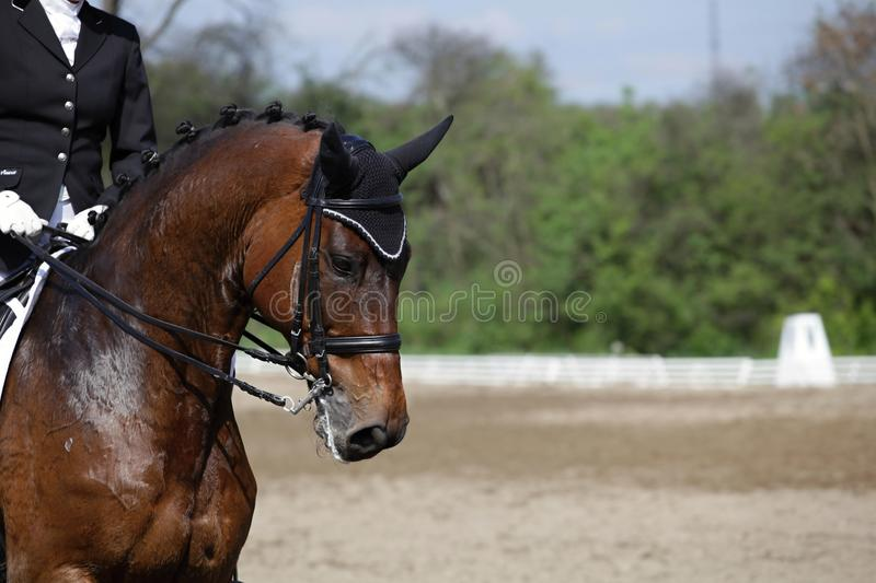 Horse on race royalty free stock photography