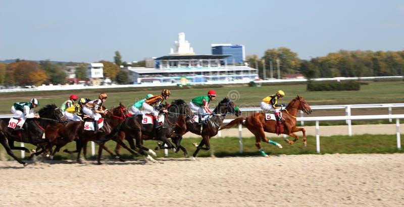 Horse race. stock image