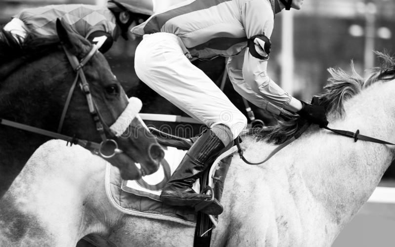 Horse race detail closeup in monochrome royalty free stock photography