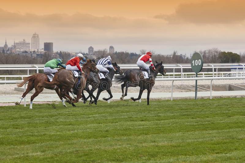 Horse race final rush. Competition sport. Hippodrome. Winner. Sp stock image