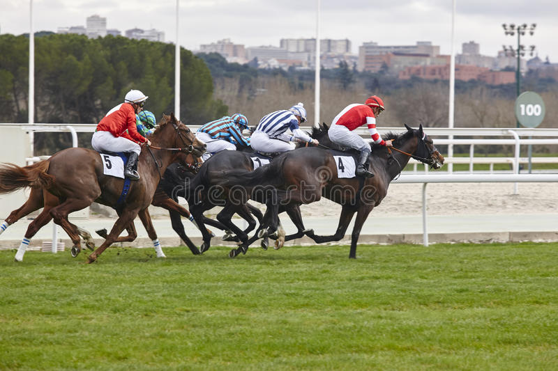 Horse race final rush. Competition sport. Hippodrome. Winner. Sp royalty free stock images