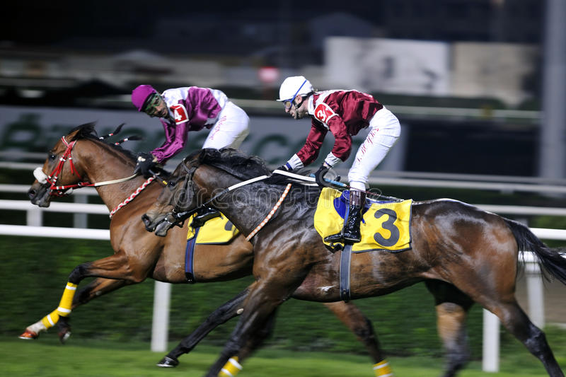 HORSE RACE FINISH royalty free stock photography