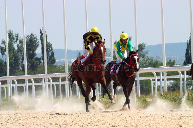 Download Horse racing. stock image. Image of track, animal, caucasus - 29936175