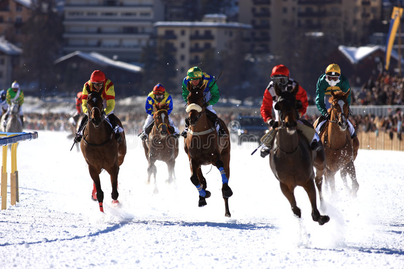 Horse Race in the snow royalty free stock image