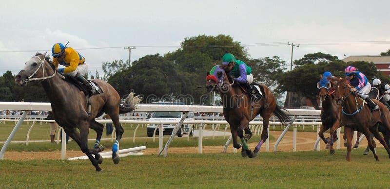 Download Horse racing stock photo. Image of horse, animals, jockeys - 113470