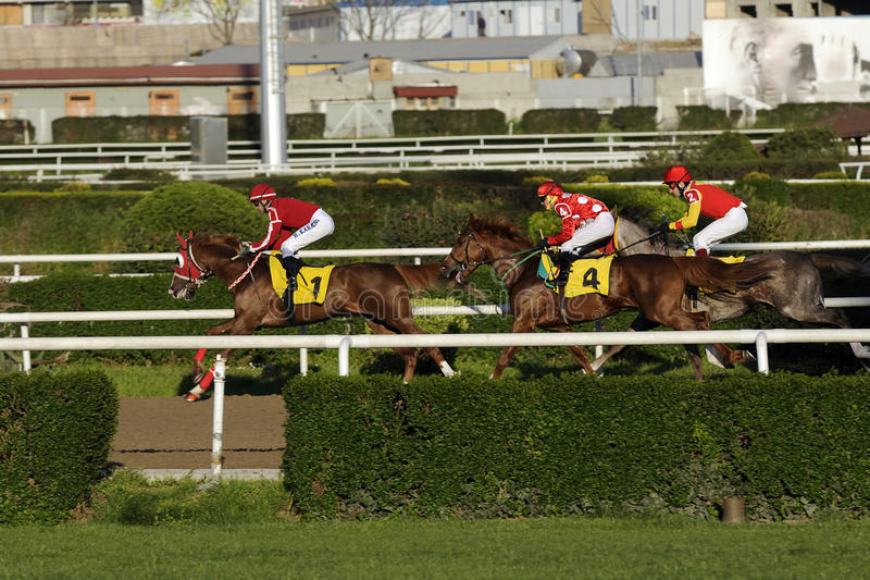 Horse racing. Three horse riders racing towards the finishing line royalty free stock photo