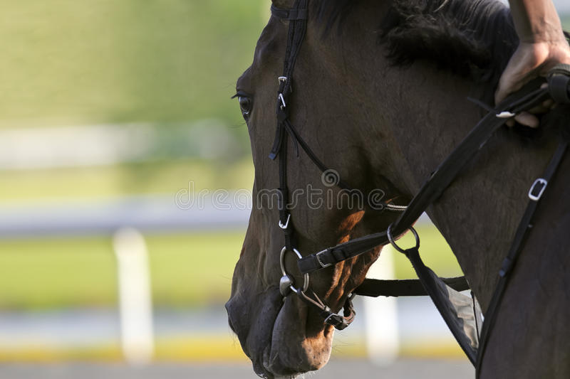 Horse Racing. Close-up of Jockeys racing thoroughbreds at an early morning practice royalty free stock photography