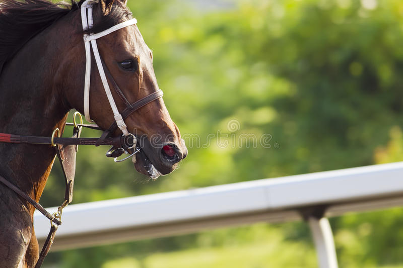 Horse Racing. Close-up of Jockeys racing thoroughbreds at an early morning practice royalty free stock images