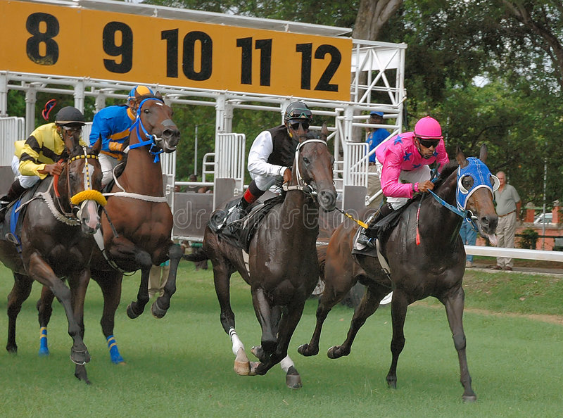 Horse racing. In Barbados, WI royalty free stock photo