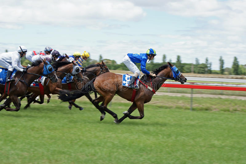 Download Horse Racing editorial stock image. Image of stallion - 18017049