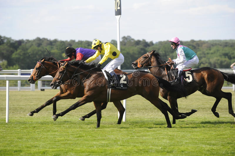 Horse Racing. At Newmarket,England royalty free stock photo