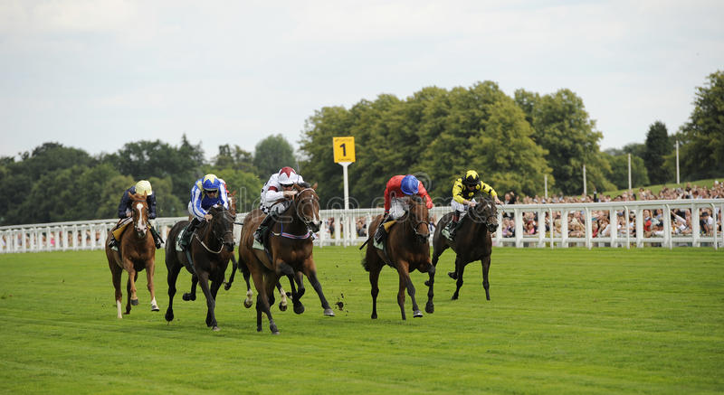 Download Horse Racing editorial stock photo. Image of saddle, competition - 21261023