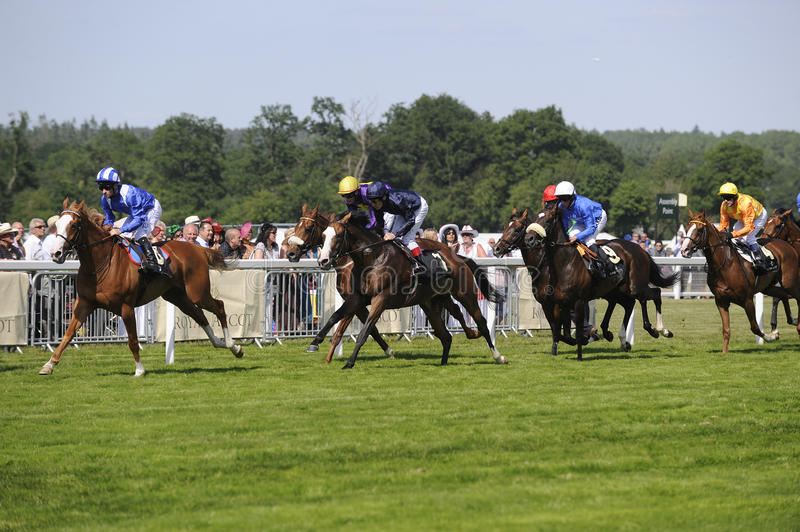 Download Horse Racing editorial stock image. Image of races, fast - 21261079