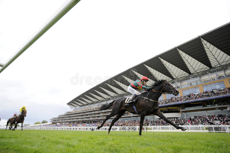 Download Horse Racing Editorial Image - Image: 21261125