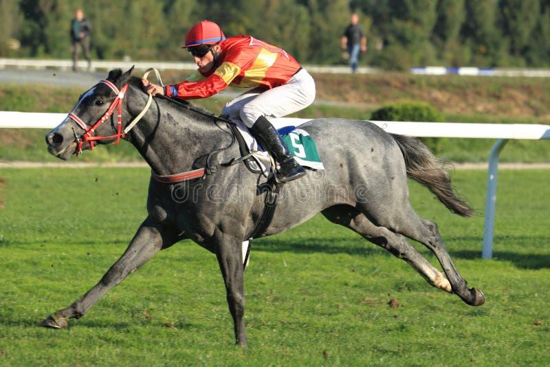 Download Horse Racing -  76th Gersch's Memorial In Prague Editorial Stock Image - Image: 26894599