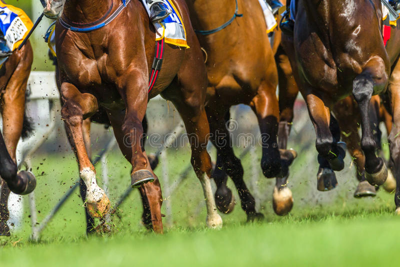 Horse Racing Animals Hoofs Legs Action. Horse racing animals bodies hoofs legs closeup track action photo stock image