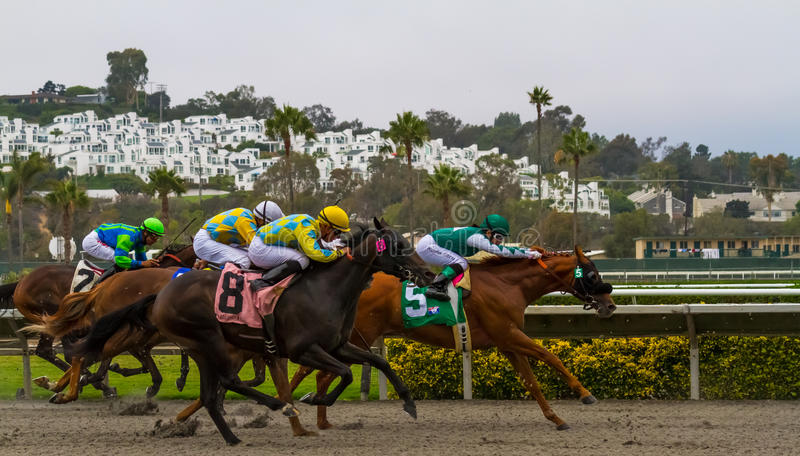 Horse Racing. At the Del Mar track in San Diego, California royalty free stock photos