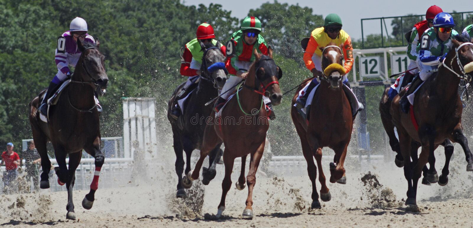 Horse racing in Pyatigorsk. Horse racing for the traditional prize Ogranichitelni in Pyatigorsk,the largest in Russia royalty free stock photos