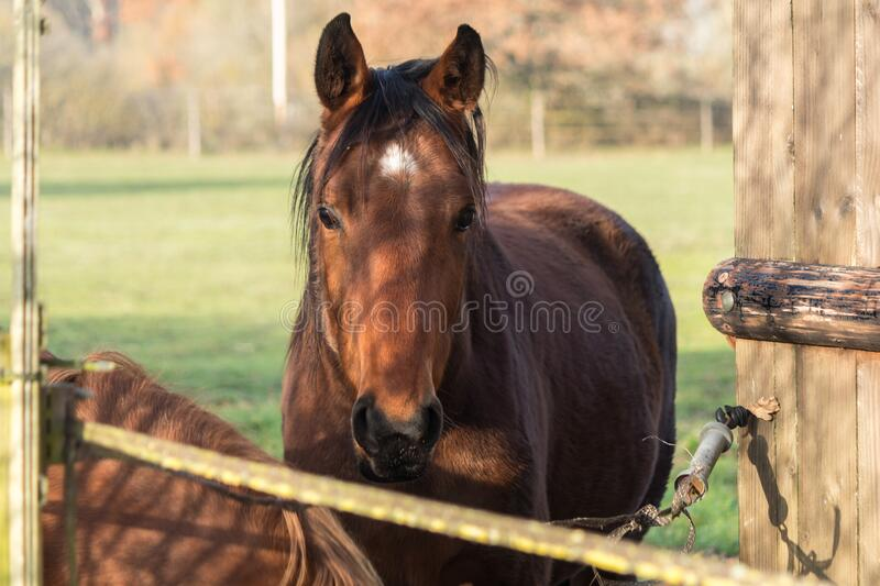 Horse for Equestrian Race in their field. Horse for racing in their field close up look at the goal royalty free stock photos