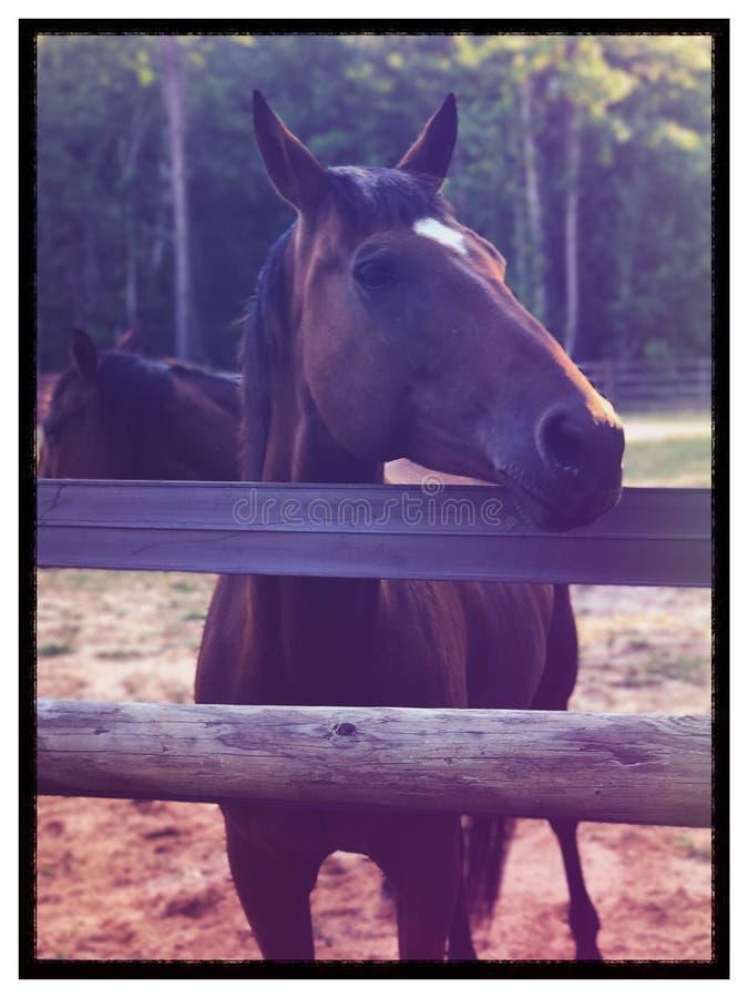Horse on the ranch. Horsepower farm animals royalty free stock photo