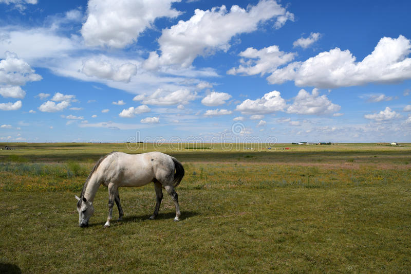 Horse on a ranch stock photography