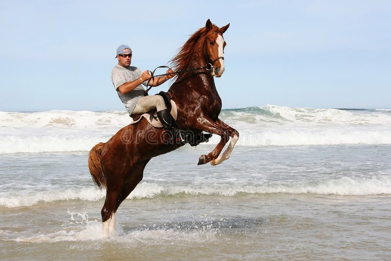 Download Horse rearing in sea stock photo. Image of animal, rider - 5120908