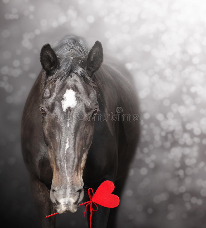 Horse with red heart, valentine stock photography