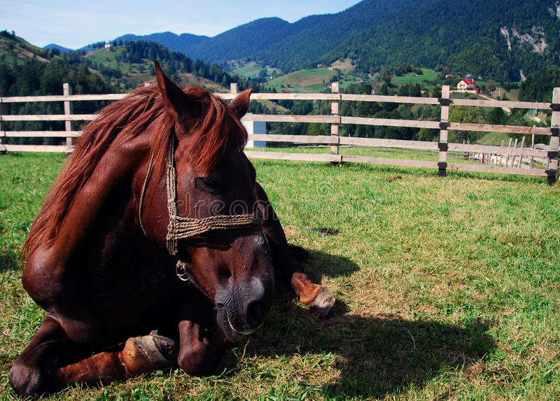 Horse relaxing royalty free stock images