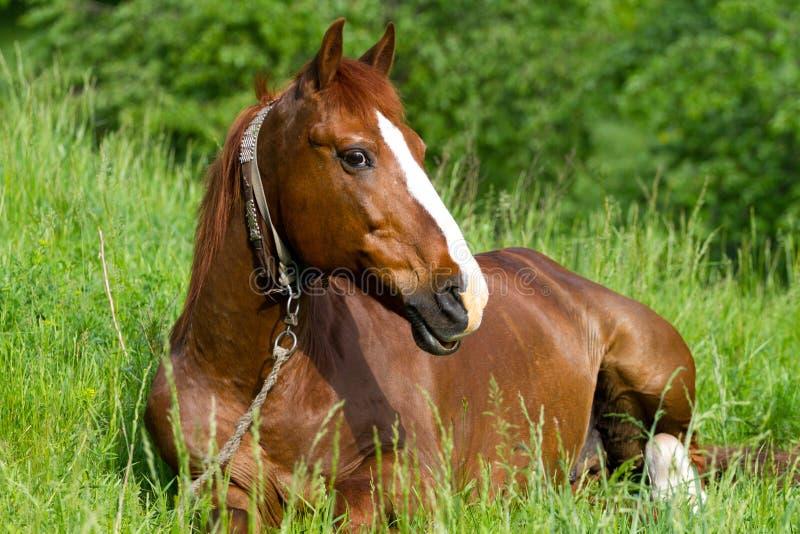 Horse Resting Stock Photo