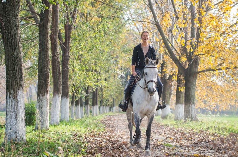 Horse ride stock photos