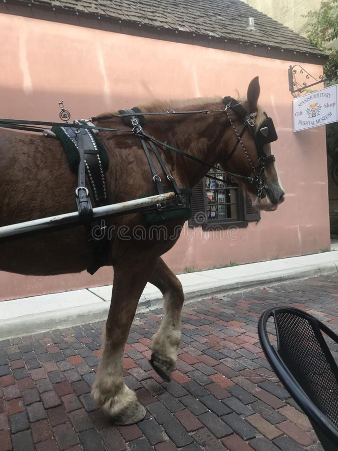 Horse ride stock image