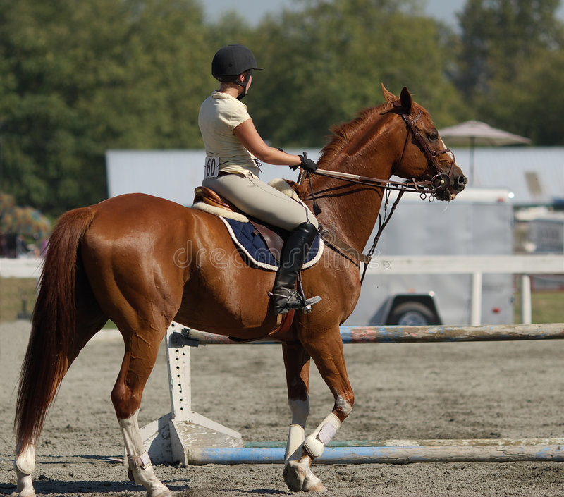 Horse and rider royalty free stock images
