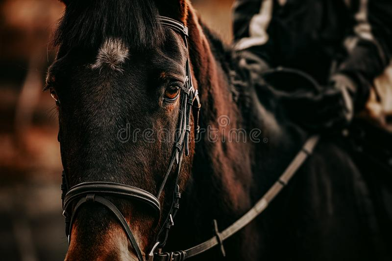 Horse rider in action detail shot. Cinematic grading royalty free stock photos