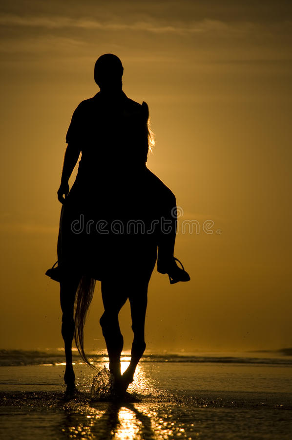 The horse rider on the beach. During sunset stock images