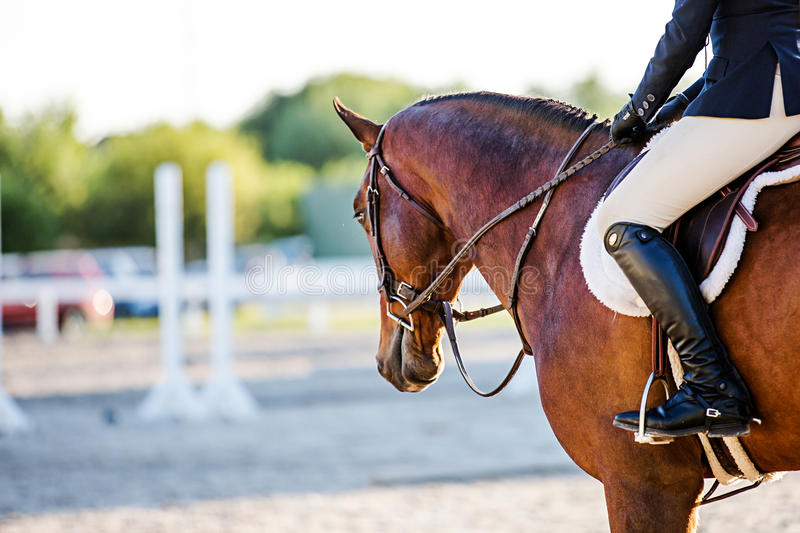 Horse and rider at an Equestrian event stock photography