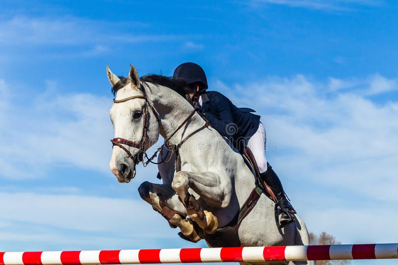 Horse Rider Jumping Pole Closeup Equestrian Action. Equestrian show jumping gray horse unidentified female rider  closeup jumping action over gate poles with stock images