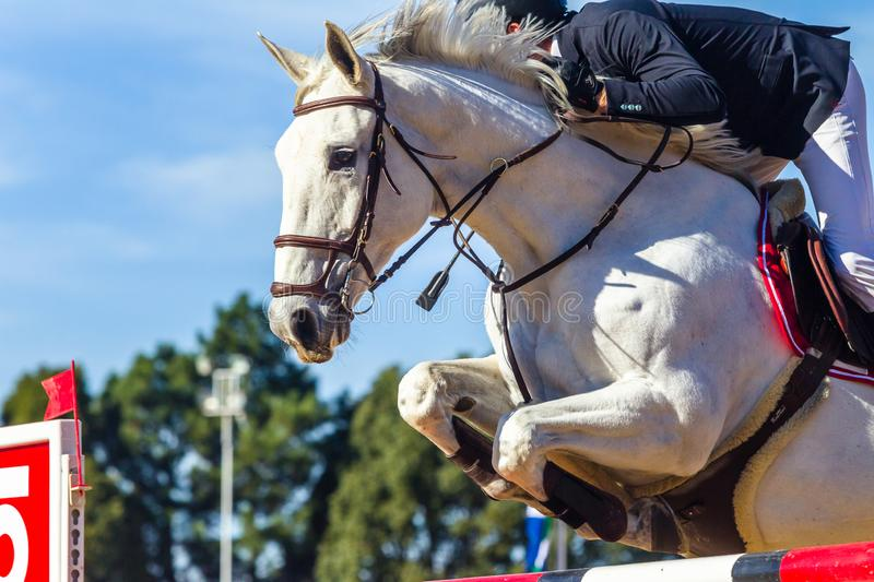 Horse Rider Jumping Pole Closeup Action. Equestrian show jumping gray white horse unrecognizable rider closeup jumping action over gate pole outdoors arena with stock photography