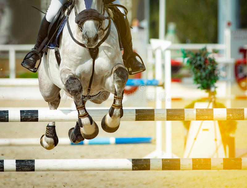 Horse and rider in show jumping. In sammer equine games royalty free stock photos