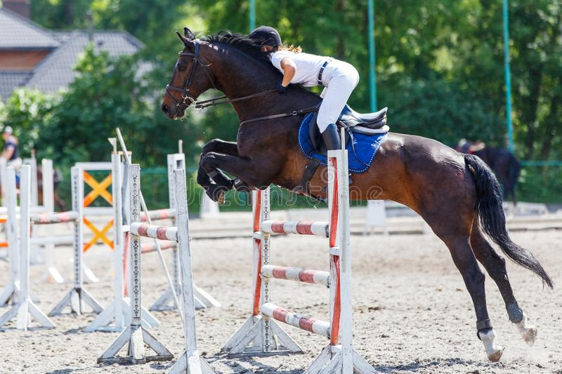 Horse rider woman on show jumping competition. Young horse rider woman jumping over the obstacle on show jumping competition. Equestrian sport background royalty free stock photo