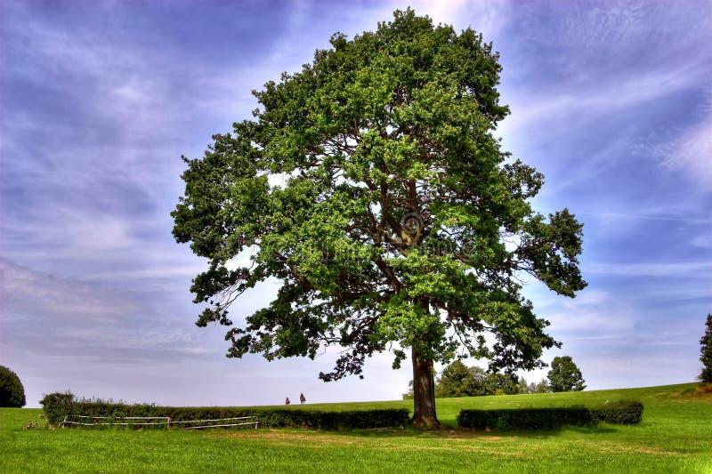 Horse riders under big oak tree stock images
