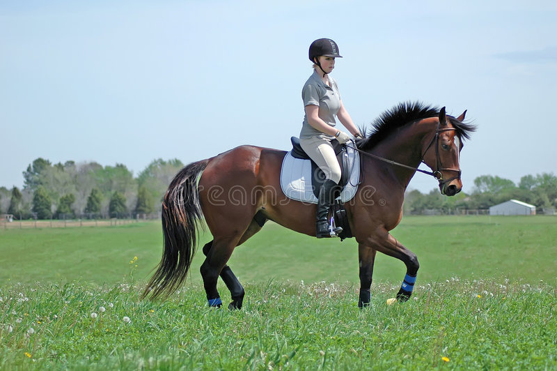 Horse riding. Young woman riding a horse in a field stock image