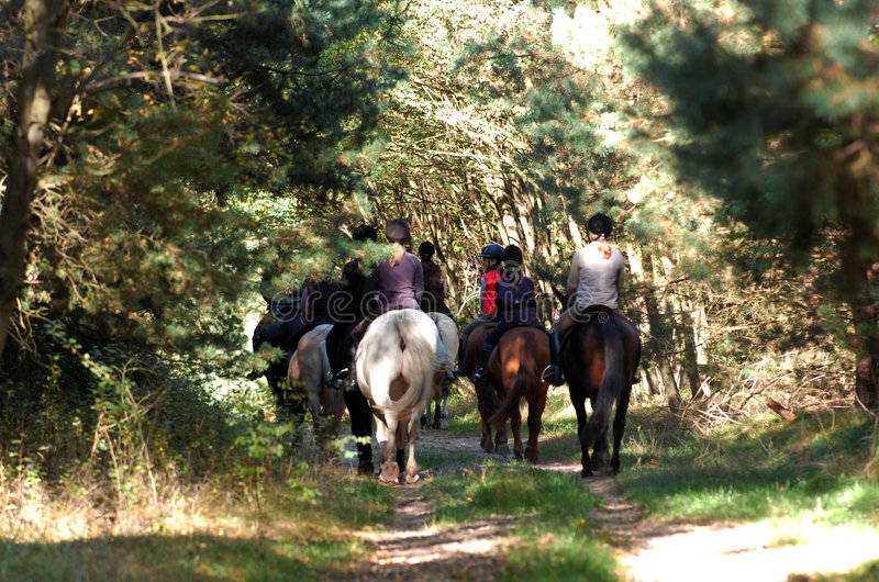Horse riding. A group of kids at horse riding through the forest in sunshine in fall while foxhunting royalty free stock images