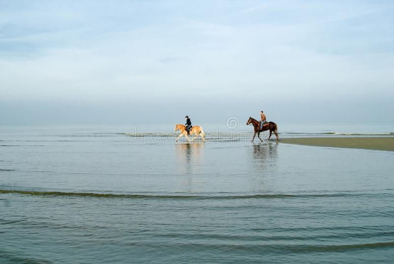 Horse riding beach royalty free stock image