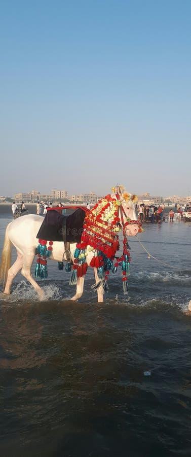Clifton, Karachi stock photo  Image of clifton, anda - 134018510