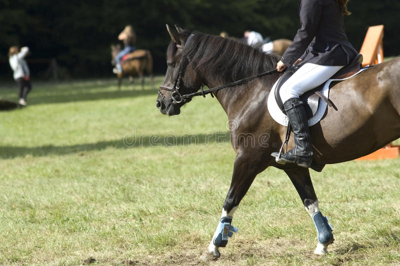 Horse riding lessons royalty free stock photography