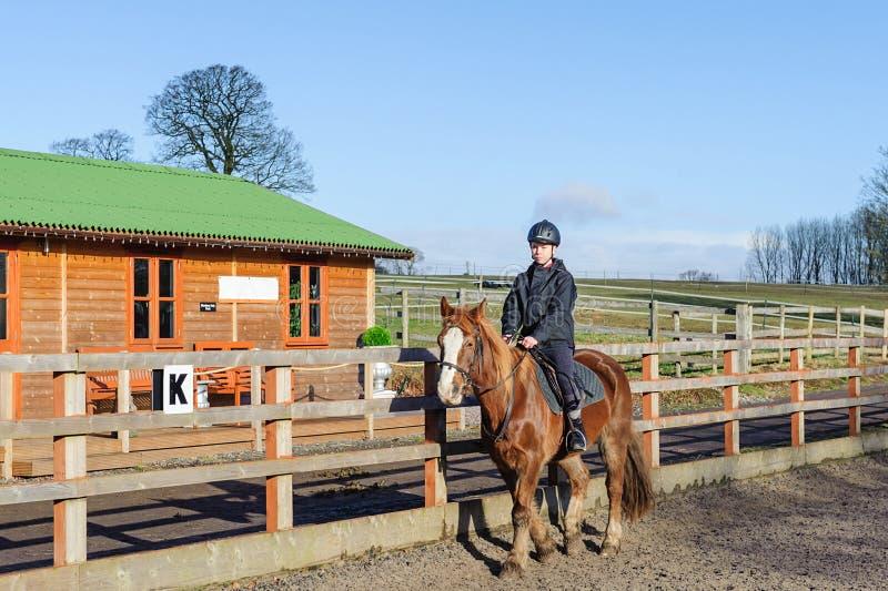 Horse riding at paddock royalty free stock photo
