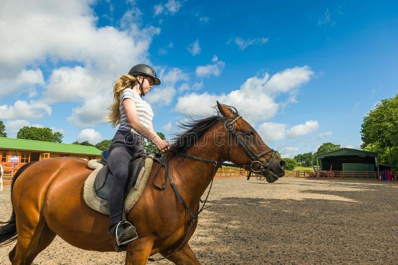 Horse riding at paddock stock image